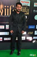 Jr NTR at IIFA Utsavam 2017 (1)
