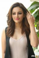 Seerat Kapoor Latest Images (25)