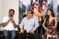 Namaste Nestama Movie Trailer Launch (20)
