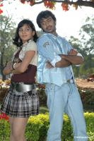 Allam Vellulli telgu movie photos, stills, pics (16)
